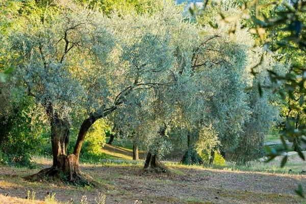 Un amour de Provence