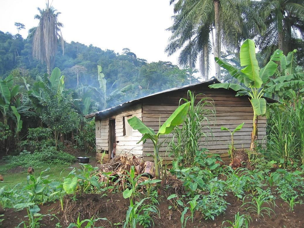 circuit sur mesure au Cameroun au départ de Lyon