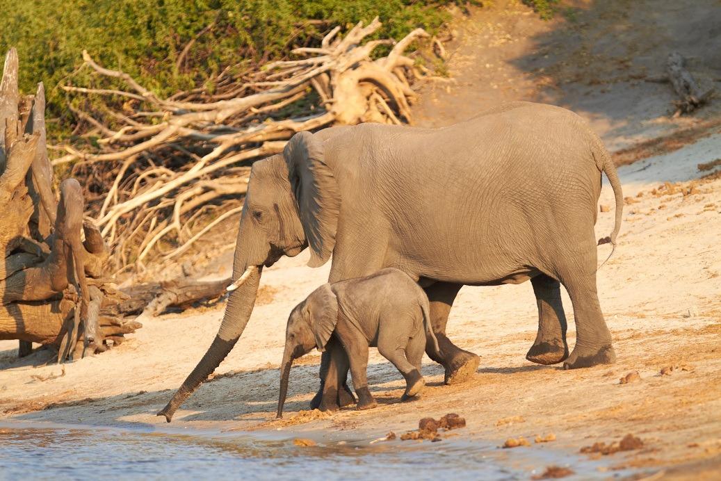 voyage sur mesure au botswana